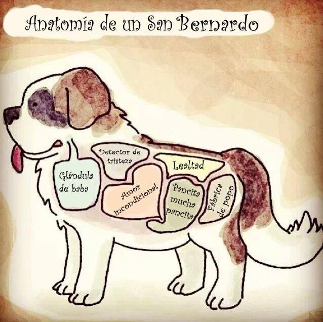 San Bernardo Anatomia Perro San Bernardo San Bernardos Lenguaje De Los Perros