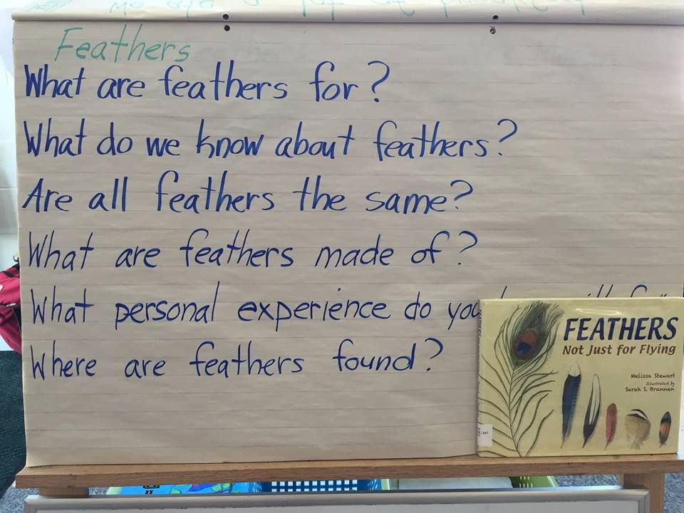 2nd graders in Hampden, ME, use Feathers to learn how to ask questions before reading a text.