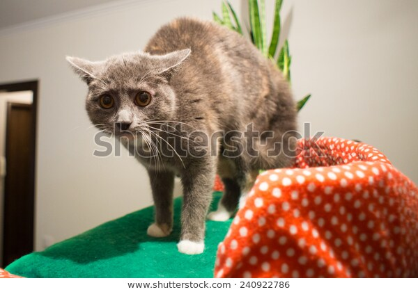 Photo of Scared Cat Stock Photo (Edit Now) 240922786