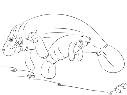 Manatee Mother And Baby Coloring Page Supercoloring Com Baby Coloring Pages Coloring Pages Manatee