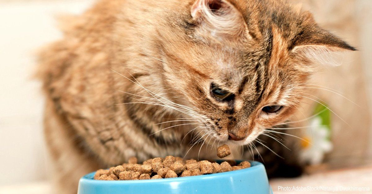 Kidney Failure In Senior Cats Is Widespread Could Cat Food Be The Cause Benadryl For Cats Cat Nutrition Cat Health Care