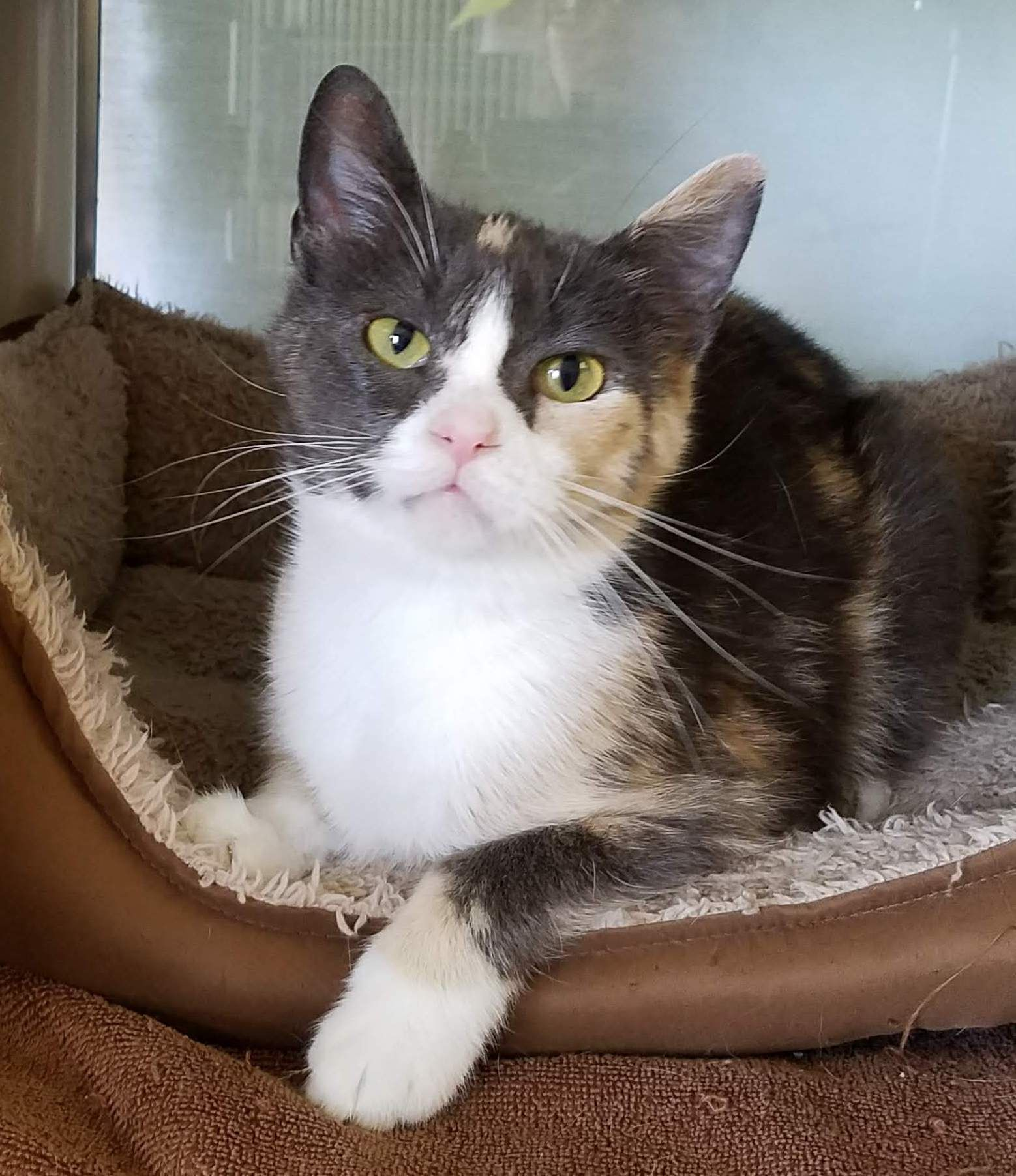 Adopt Lacey on Cat nutrition, Cats, Cat whisperer