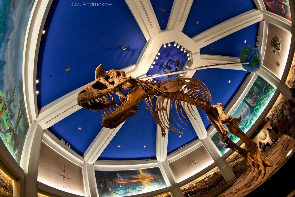 Dinosaur attraction at Disney Animal Kingdom