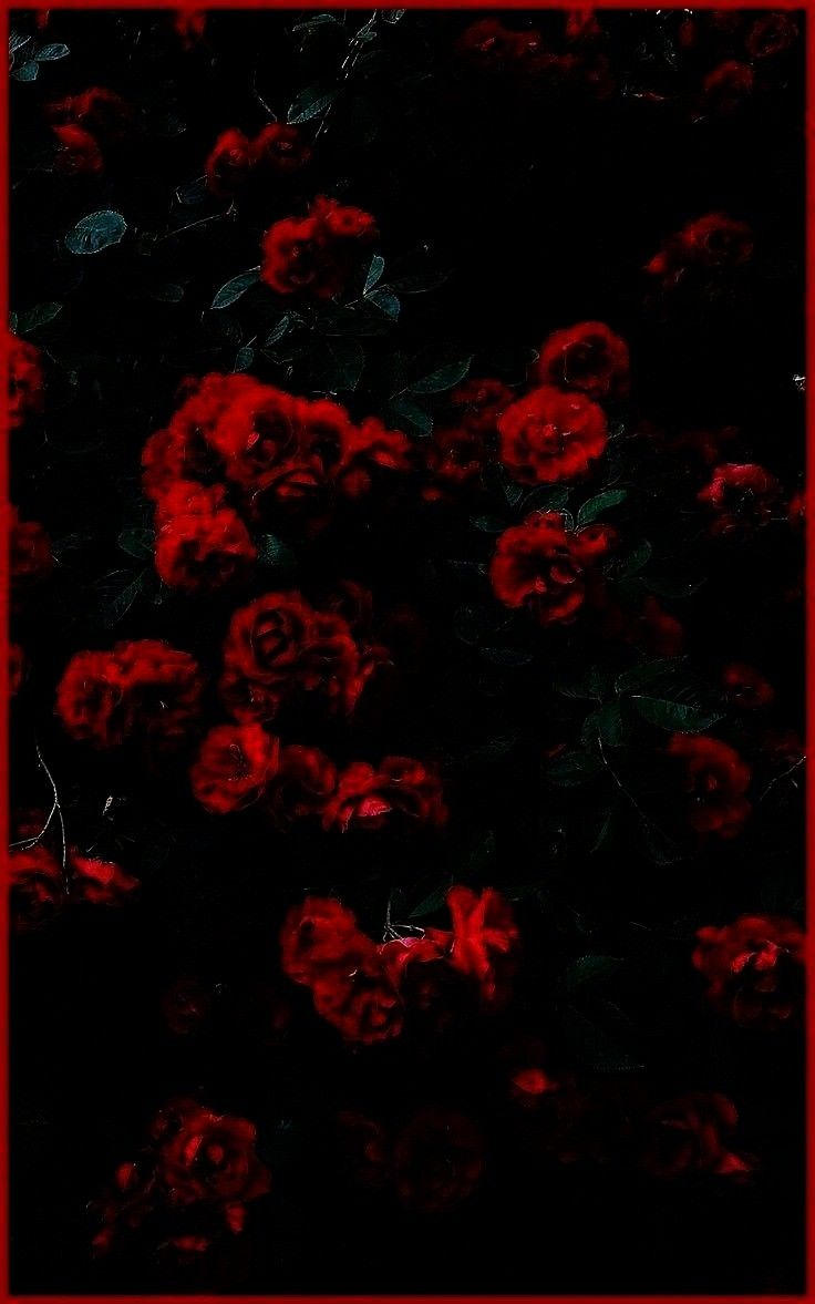 bilder   Diseño vida comum Flowers Wallpaper Landscape 41 Ideas Red roses wallpaper Coisas sobre nós Blumen   29 trendy quotes life nature inspiration Found...