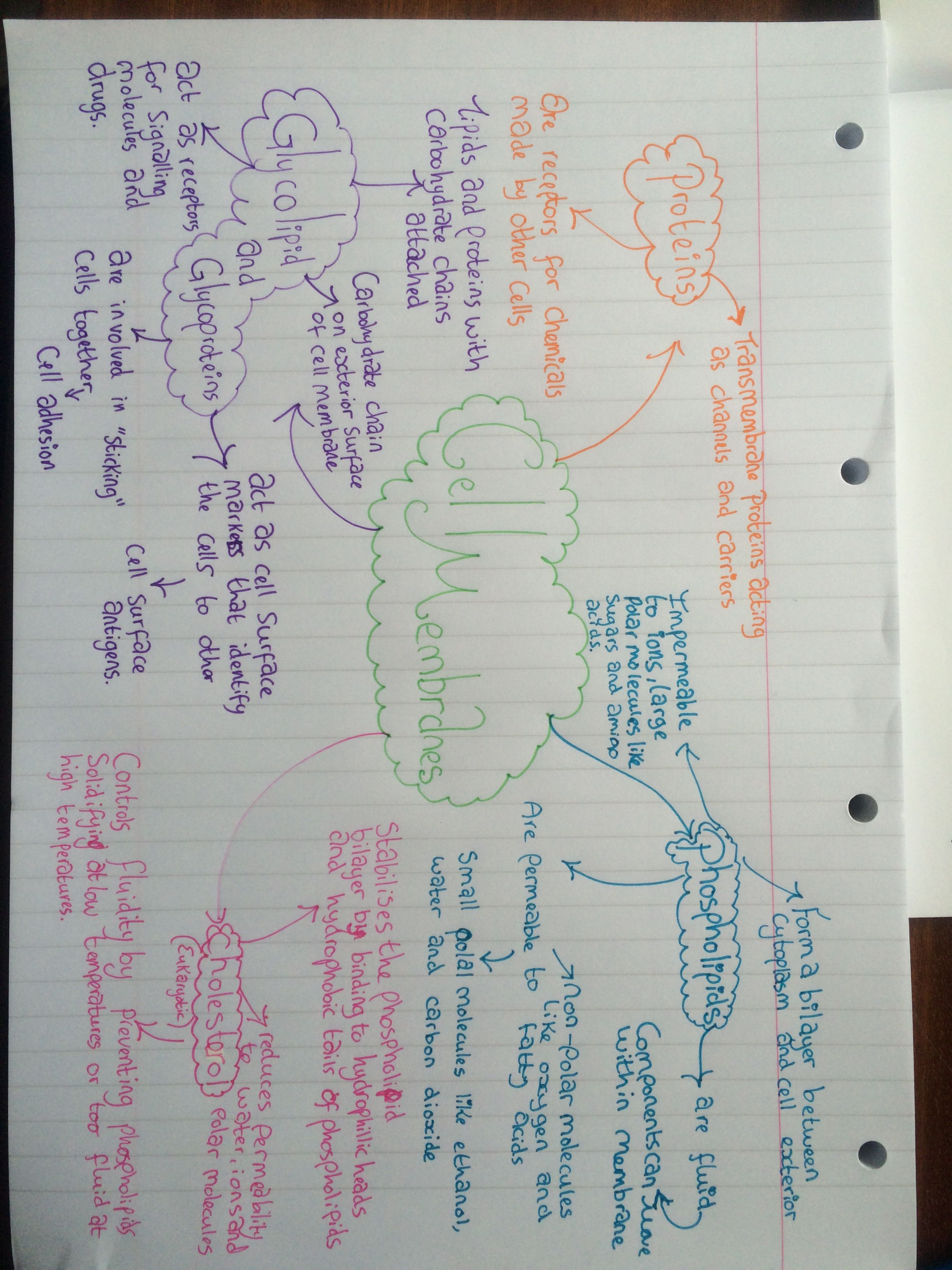 As Level Biology Cell Membrane Mind Map Biology Notes Science Cells Cell Biology [ 3264 x 2448 Pixel ]