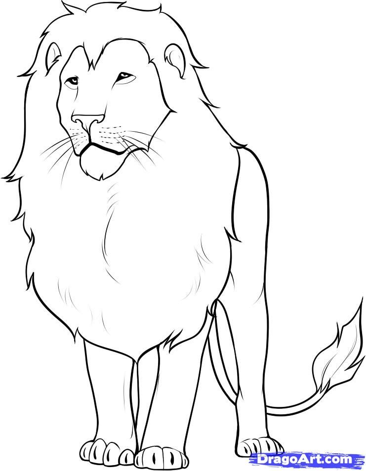 How To Draw A Lion Step 13 Lion Sketch Lion Drawing Drawings