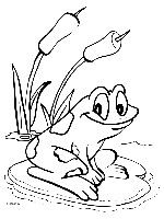 Kleurplaten Dieren Kikker.Kleurplaat Kikker Op Lelieblad Frogs Frog Coloring Pages Animal