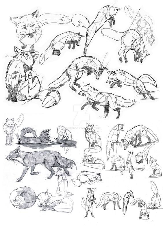 Animals Drawing 75 Picture Ideas Drawing Ideas And Tutorials