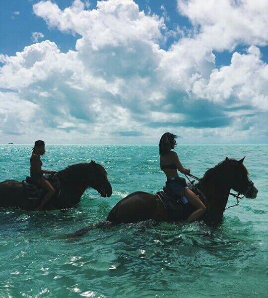 horse | animal | pet |