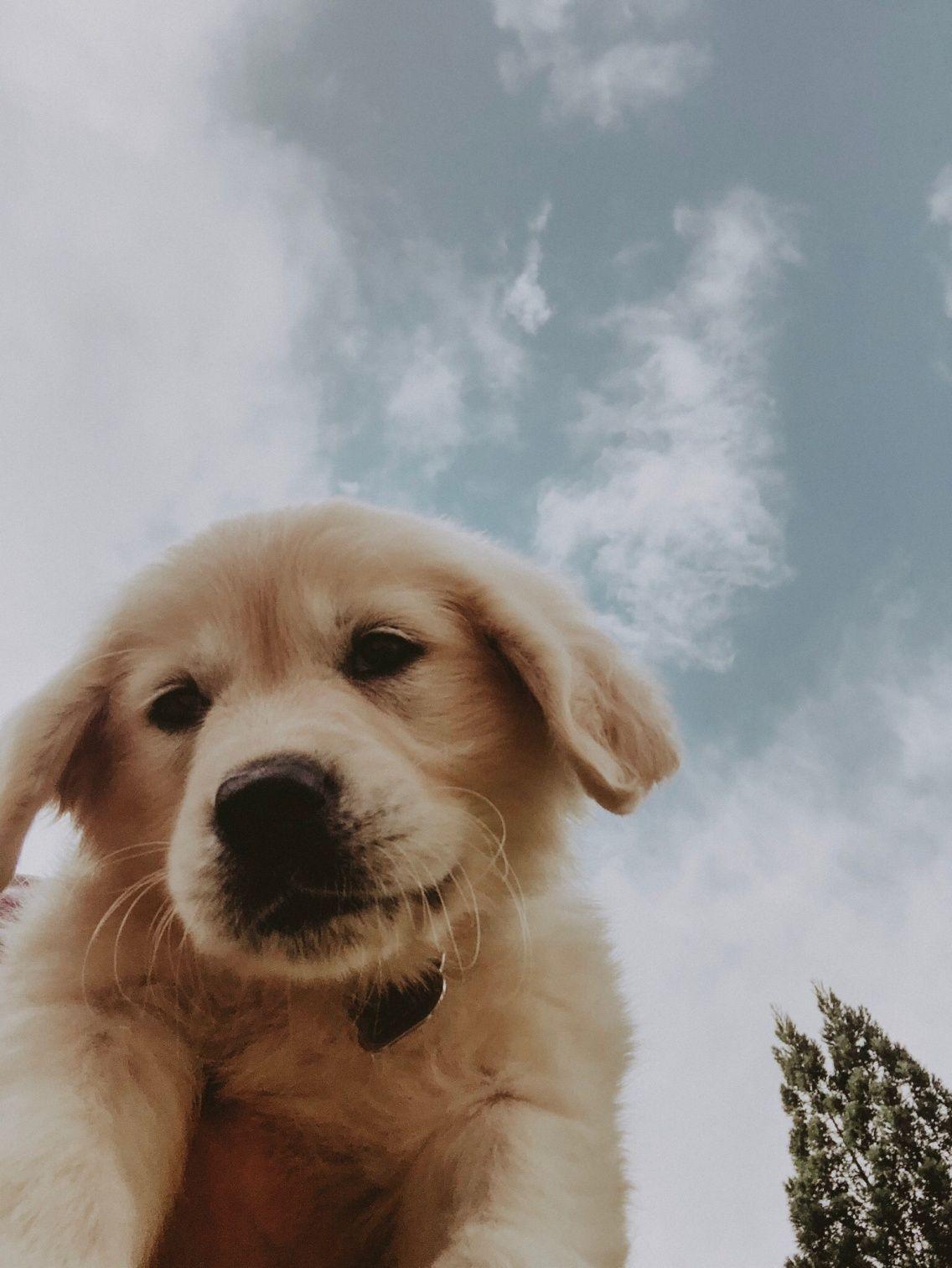 Vsco Selfie Loganbott Cute Dog Wallpaper Cute Dog Pictures Cute Puppy Wallpaper