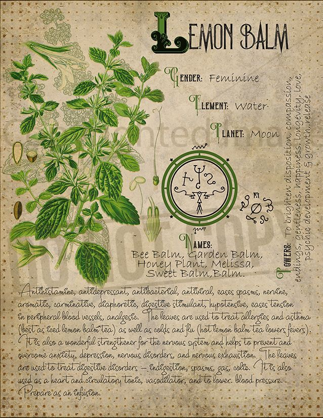 Book of Shadows, Printable pages of Herbs, Witchcraft, Herbal Grimoire BOS Sheets, Magic Potion, Spell Ingredient, Green Witch, Herbarium 6 #greenwitchcraft
