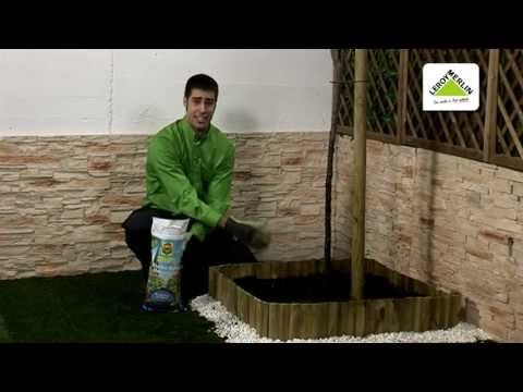 6 Plantar Un árbol Frutal Cultivado En Maceta Leroy Merlin