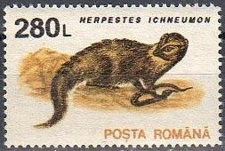 Znaczek: Ichneumon (Herpestes ichneumon) (Rumunia) (Zwierzęta) Mi:RO 4910X,Sn:RO 3844,Yt:RO 4103