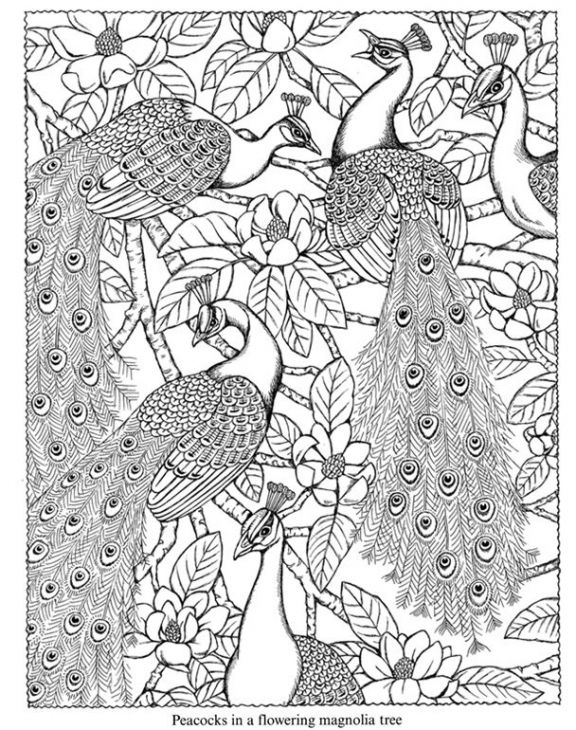 Beautiful Doodle Art Of Peacock For Hard Coloring Page Free