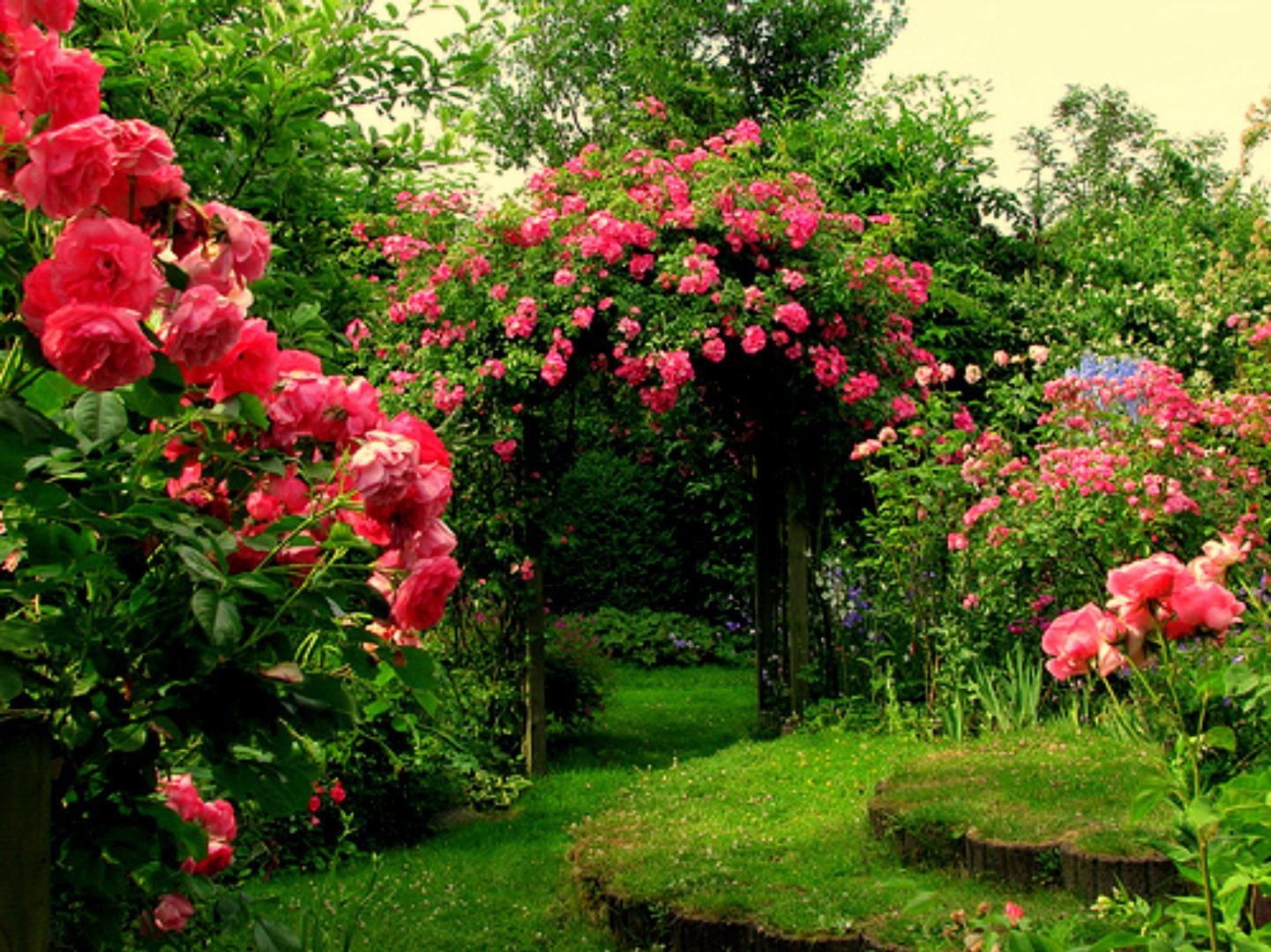 Garage , Nice Rose Flowers In Beautiful Garden Pictures ...
