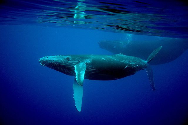 Baby Whale by longshorephotography, via Flickr