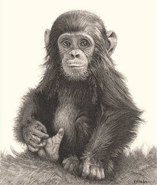 Drawing Amimals With Pencil Incredibly Realistic Pencil Drawings