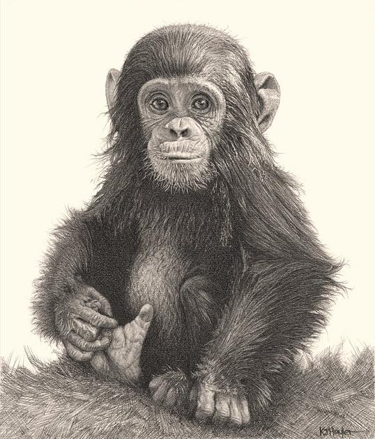 AnimalPencilDrawing1.png (538×631) Pencil drawings of