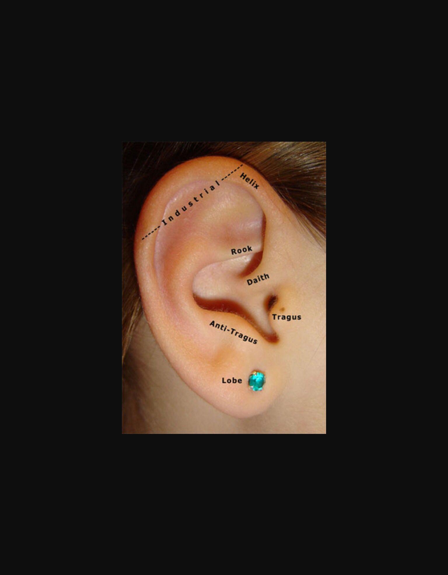 Double nose piercing plus septum  piercing  Piercings  Pinterest  Piercing and Piercings