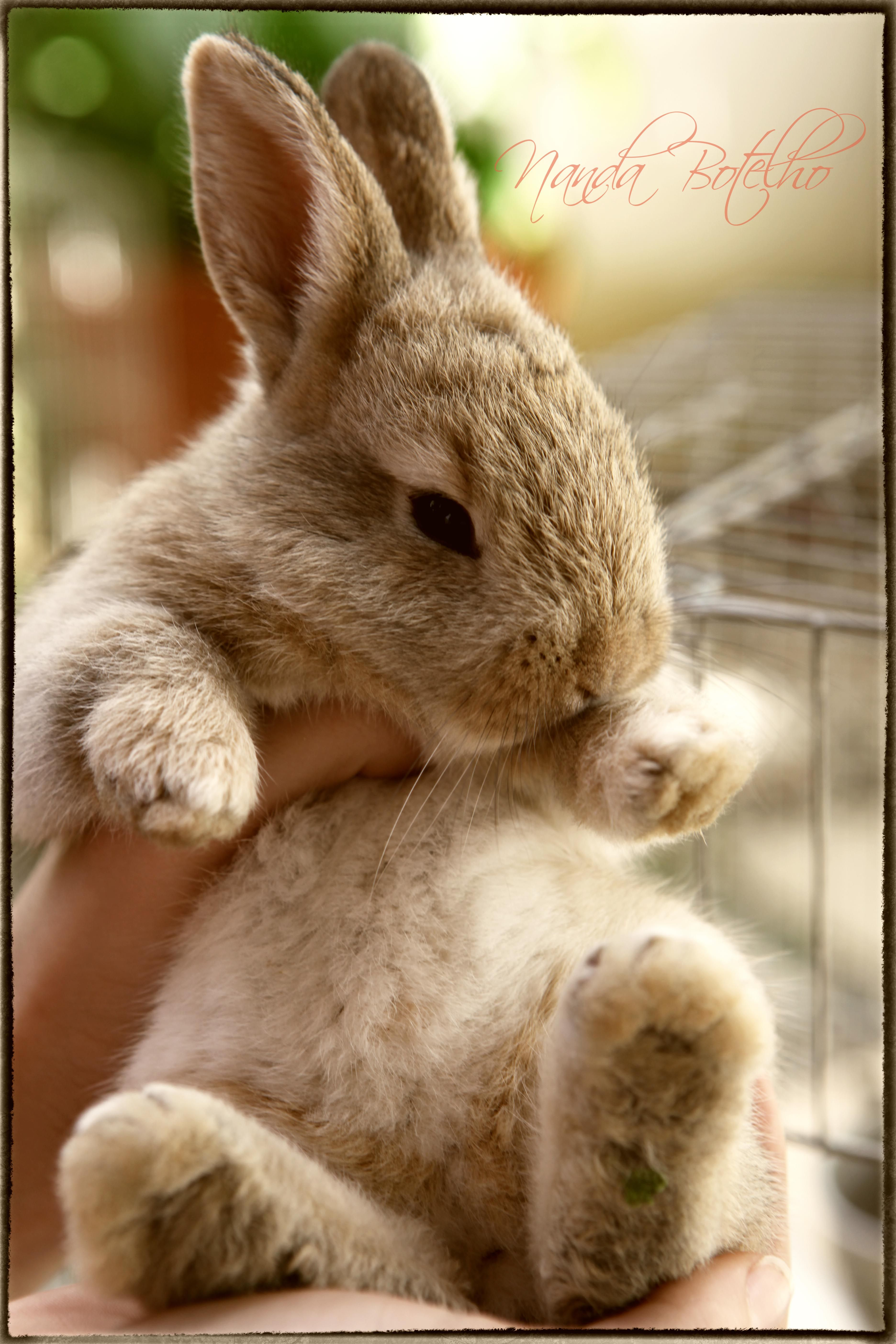 caramelo a cute bunny baby Cute animal pictures, Cute