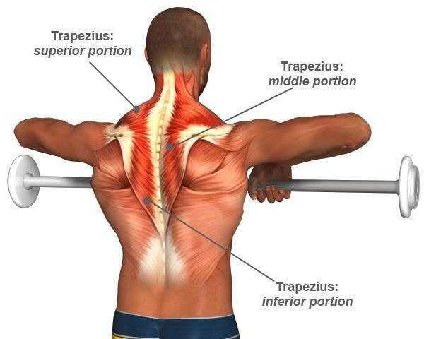 Trap Workouts  Trap Workouts - The Top 5 Trap Exercises  While many weight trainees bodybuilder fitness enthusiasts and other gym goers focus a great deal of their attention on the lats too many neglect to train and develop their traps to their fullest potential. When fully and properly developed the trapezius muscles complete a  physique making it appear much thicker and more powerful. Here are the 5 best trap exercises for building the biggest upper back possible:  1. Deadlifts  Though it does #trapsworkout