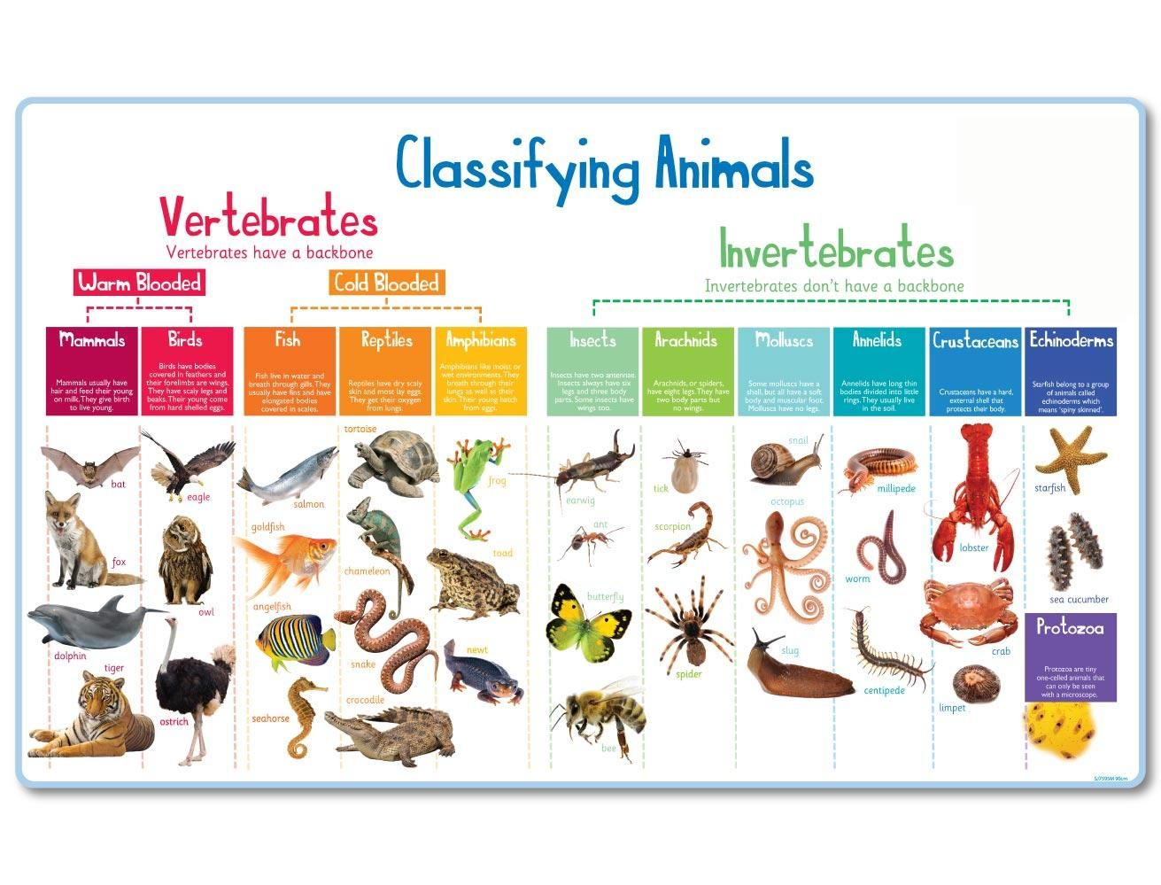Classification Of Animals Vertebrates