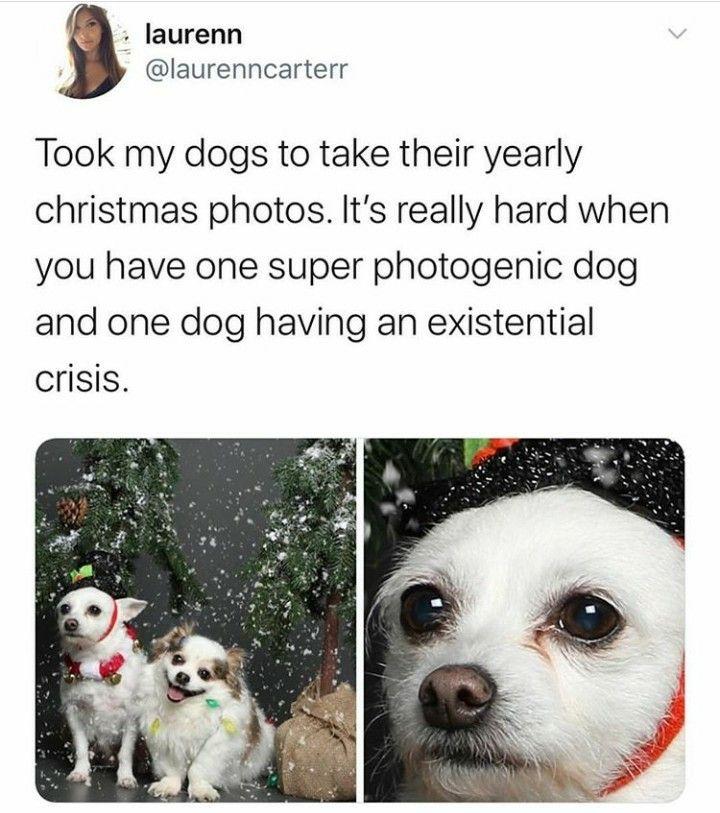 50 Pics Funny Texts Compilation 2019 9 Lustige Tiere Lustige Hund Meme Lustige Bilder Von Tieren