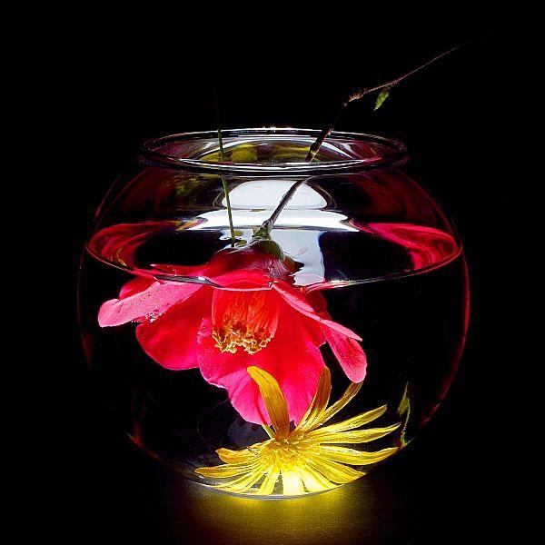 Upside down flower is cool