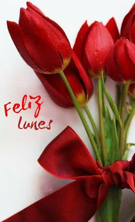 Feliz Lunes Dias De La Semana Tulipanes Flores Y Tulipanes Rojos