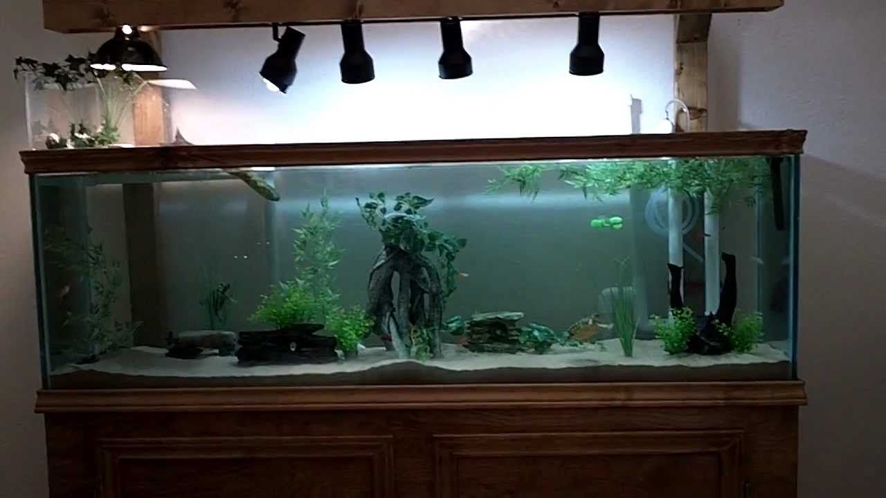 125 Gallon Diy Turtle Community Tank Aquarium Set Up Ideas Pinterest Turtle Aquariums And