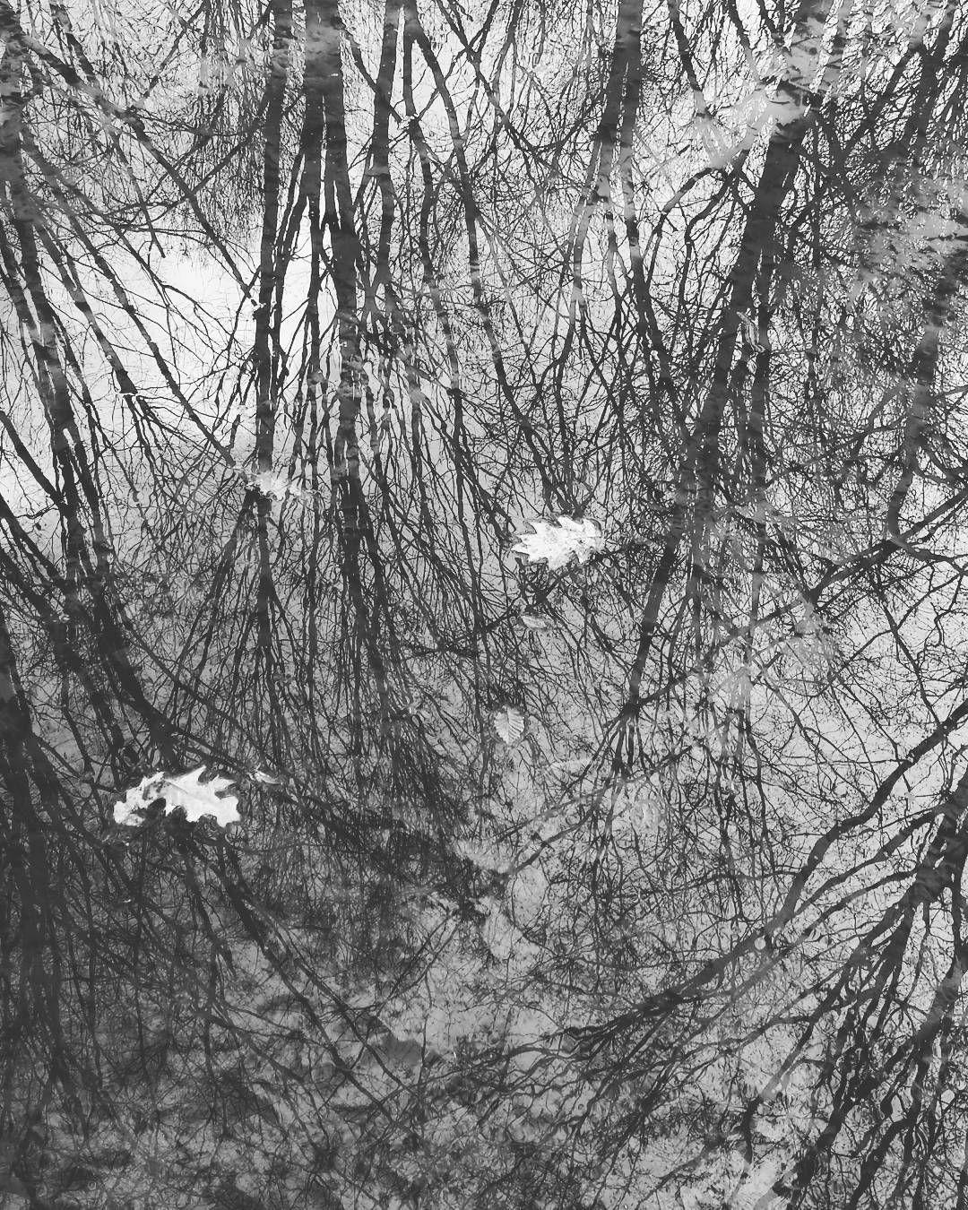 #boscoincittà #Milano #milanocityofficial #milanodavedere #ig_milan #instamilano #instamilanocity #ilovemilano #welovemilan #milano_forever #igclub_hdr #trees #alberi #foglie by pakoloco