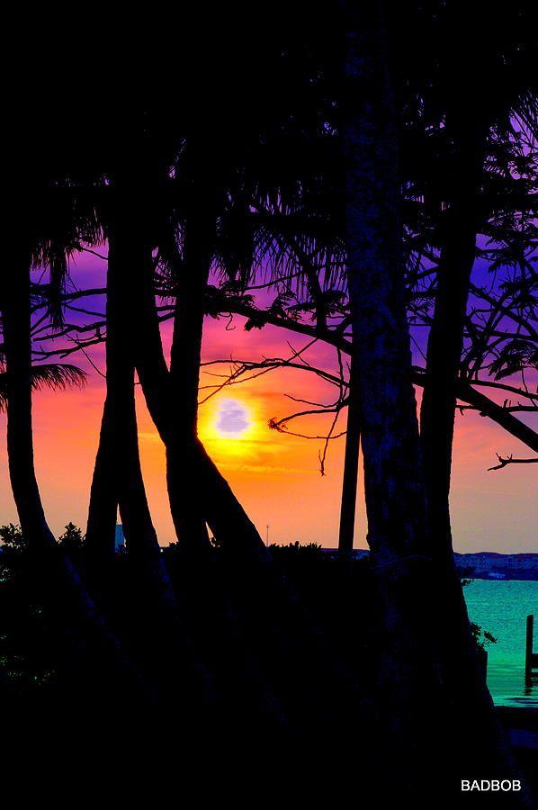 ✯ Florida Park Sunset Silhouette