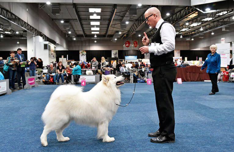 Alle Infos rund um die wichtigsten Hunde-Ausstellungen des VDH und seiner Mitgliedsvereine: Termine, Ergebnisse, Anmeldung und mehr. Jetzt lesen!