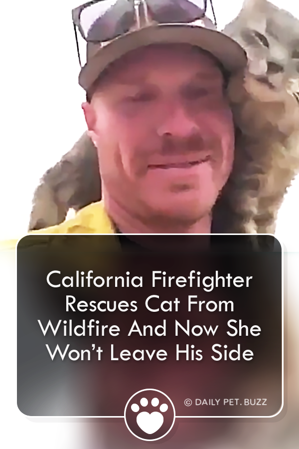 California Firefighter Rescues Cat From Wildfire And Now She Wont Leave His Side A cat rescued from the Paradise CA fire adopted the firefighter that pulled her from the...