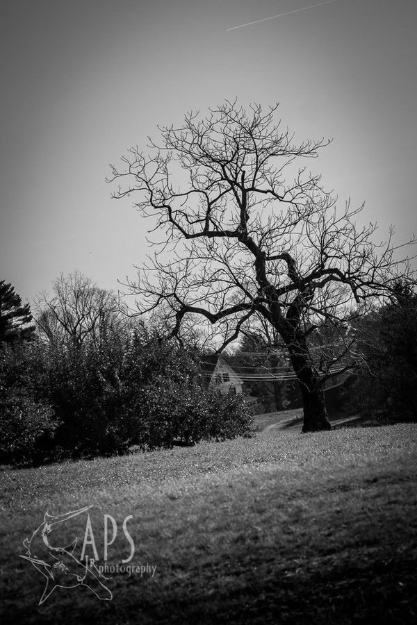 Old Tree by Alan Scherer on 500px