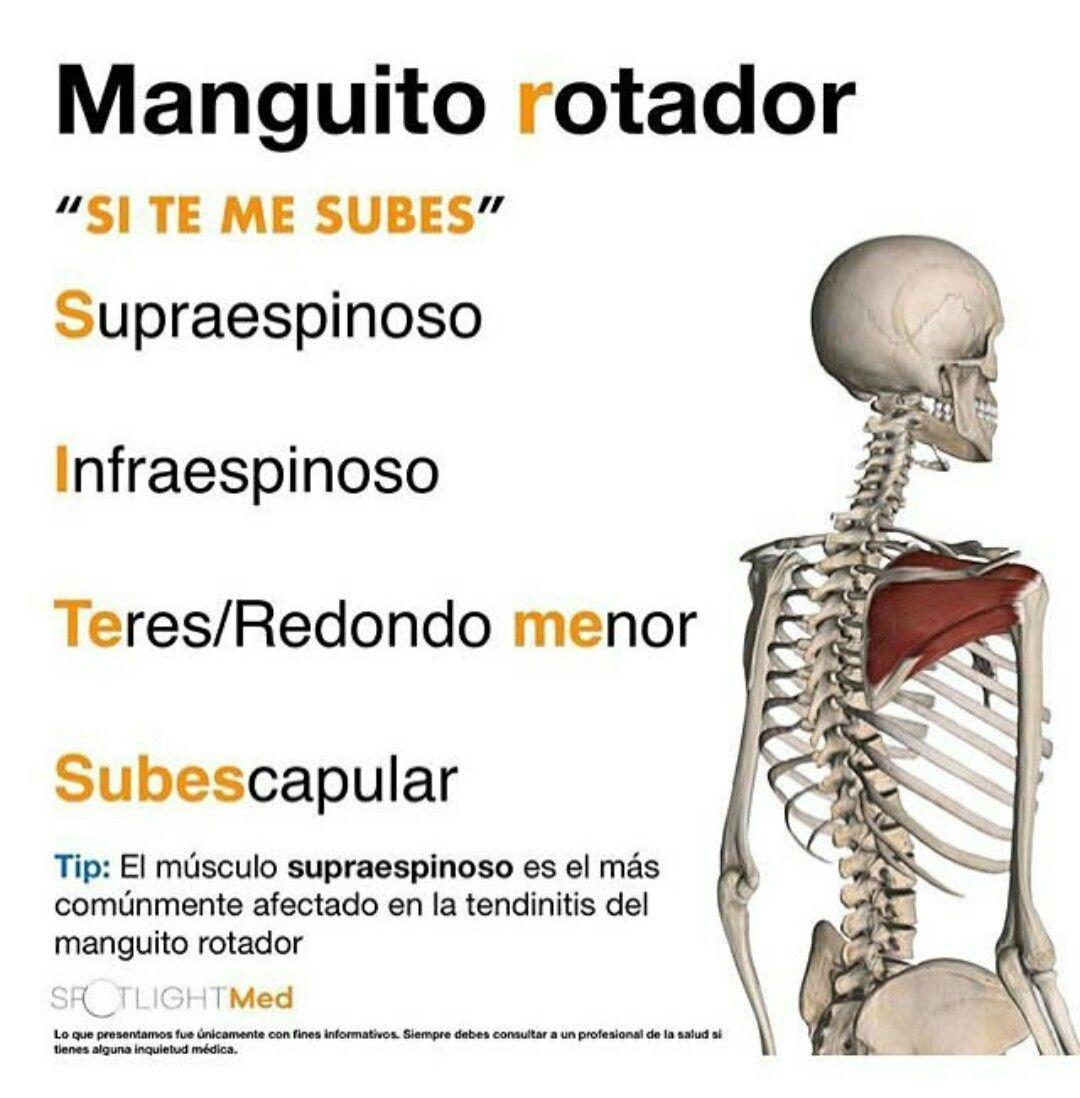 Manguito rotador #SITEMESUBES | Estiramientos | Pinterest | Manguito ...