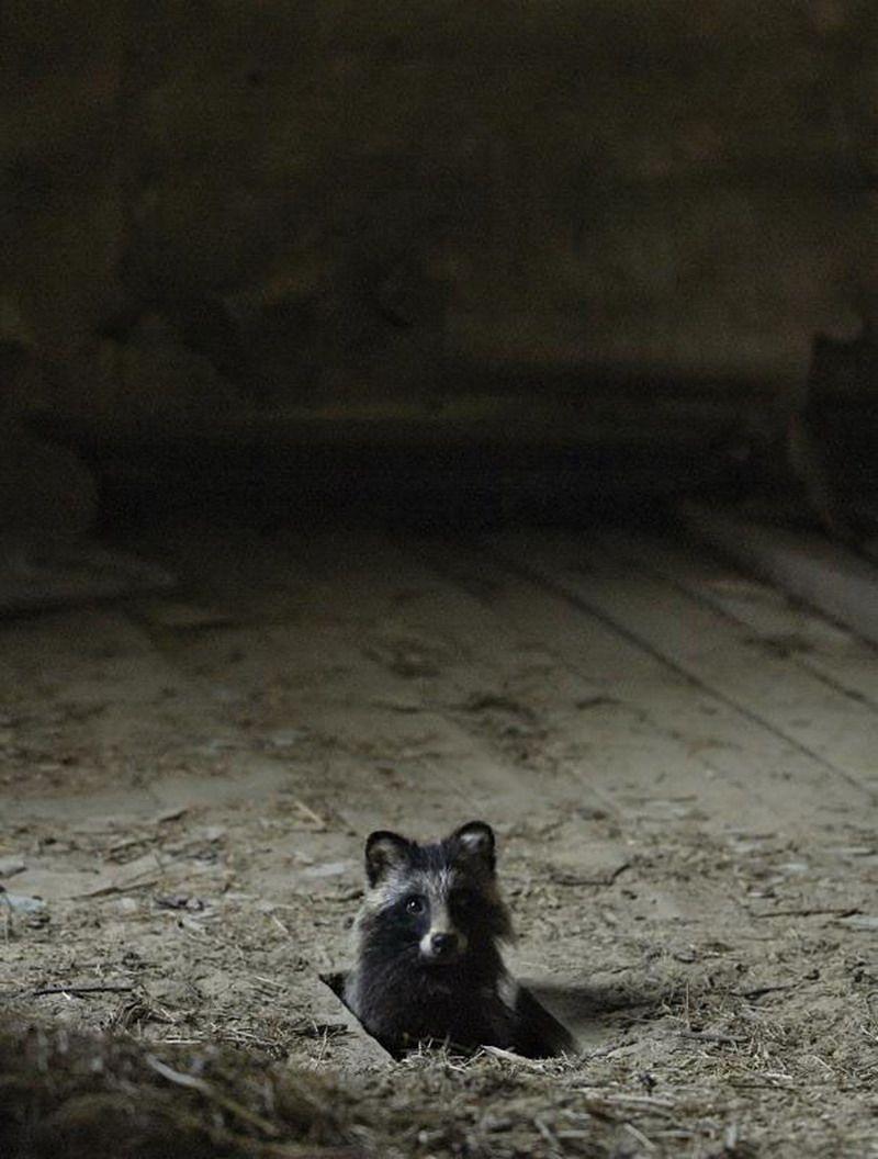 Animales que invaden las casas abandonadas 7