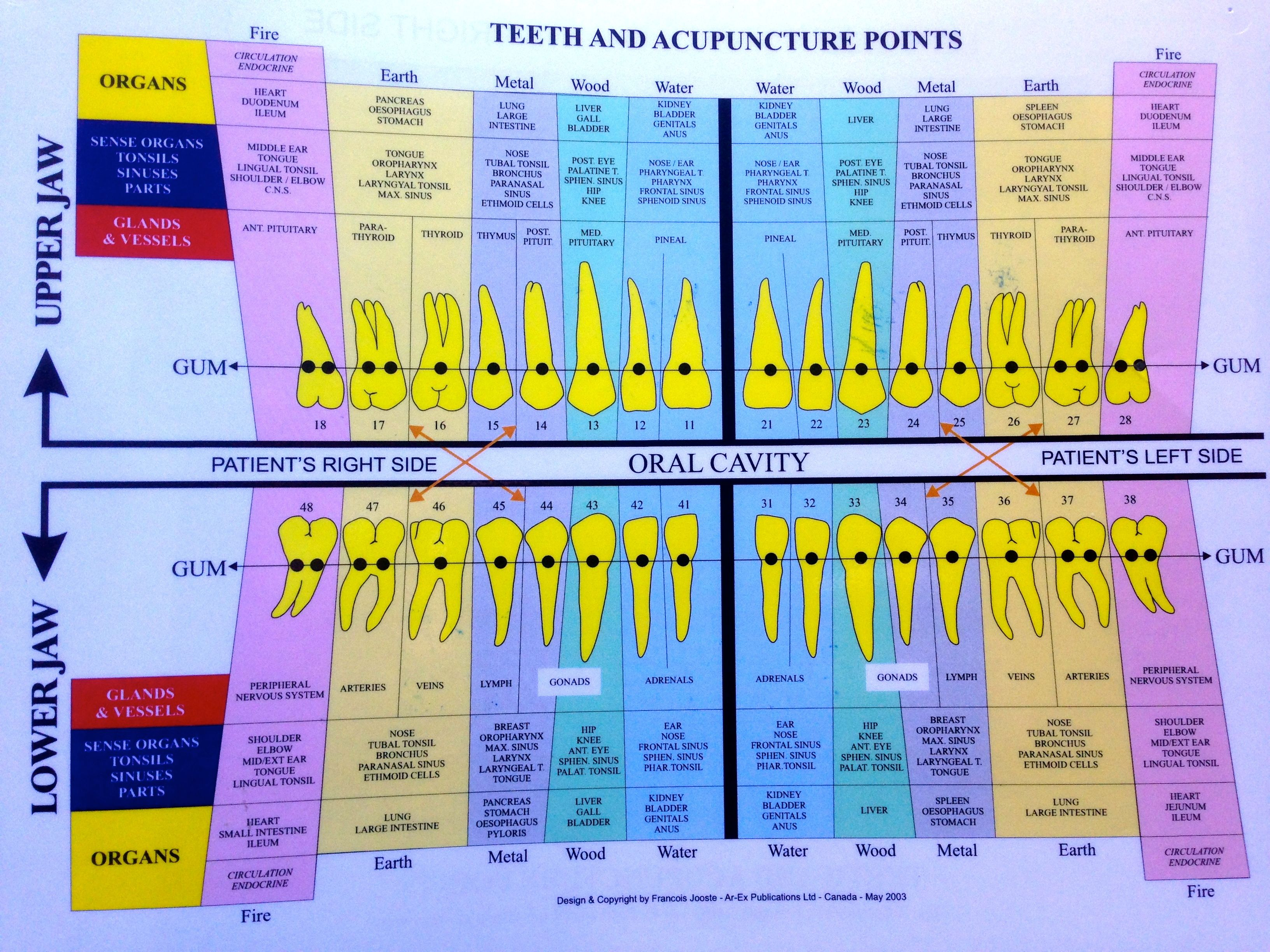 Tooth charts emotions google search also health teeth acupuncture rh pinterest