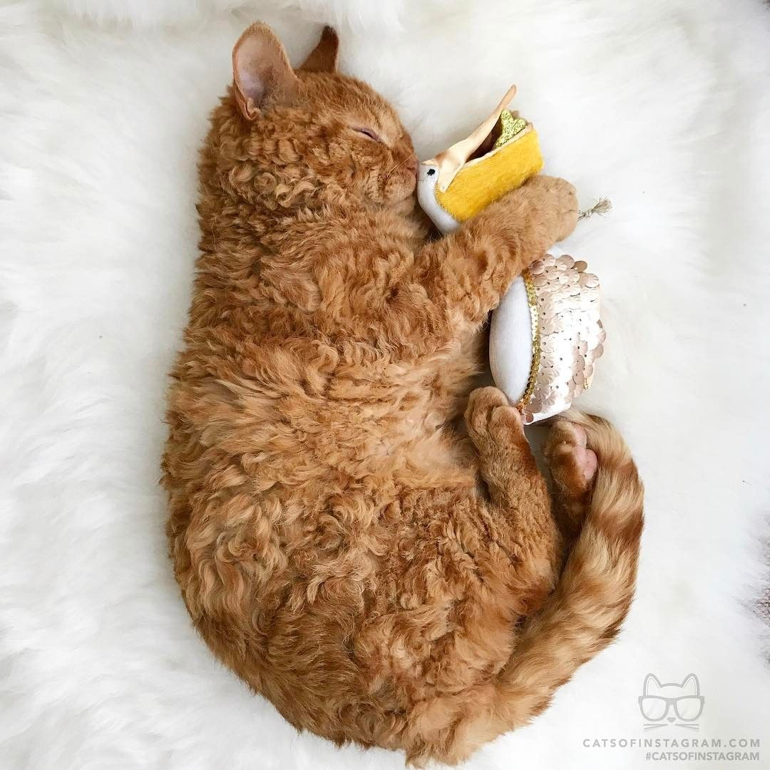 From Rina Takei Let S Sleep Together Catsofinstagram With Images Cats Kitten Pictures