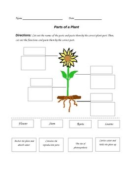 parts of a plant worksheet reading display parts of a plant plants reading display. Black Bedroom Furniture Sets. Home Design Ideas