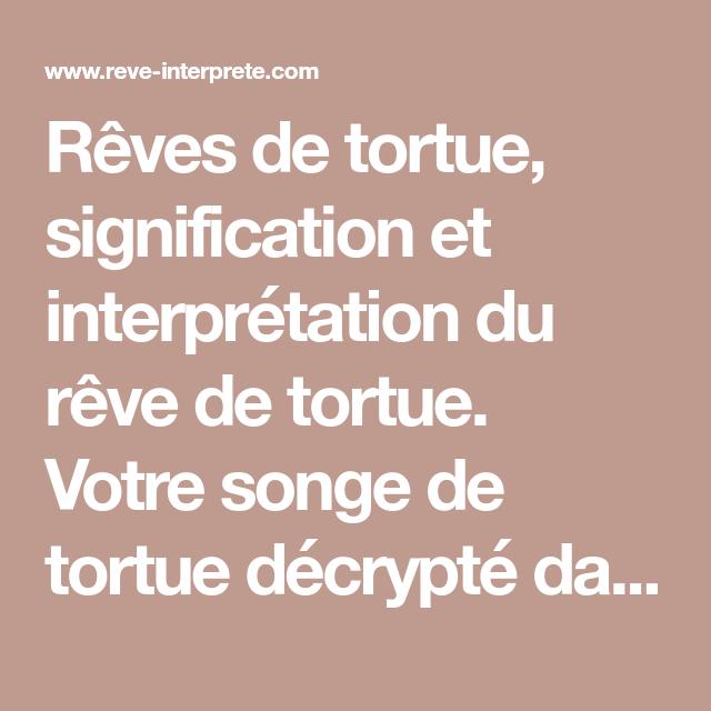 Reves De Tortue Signification Et Interpretation Du Reve De