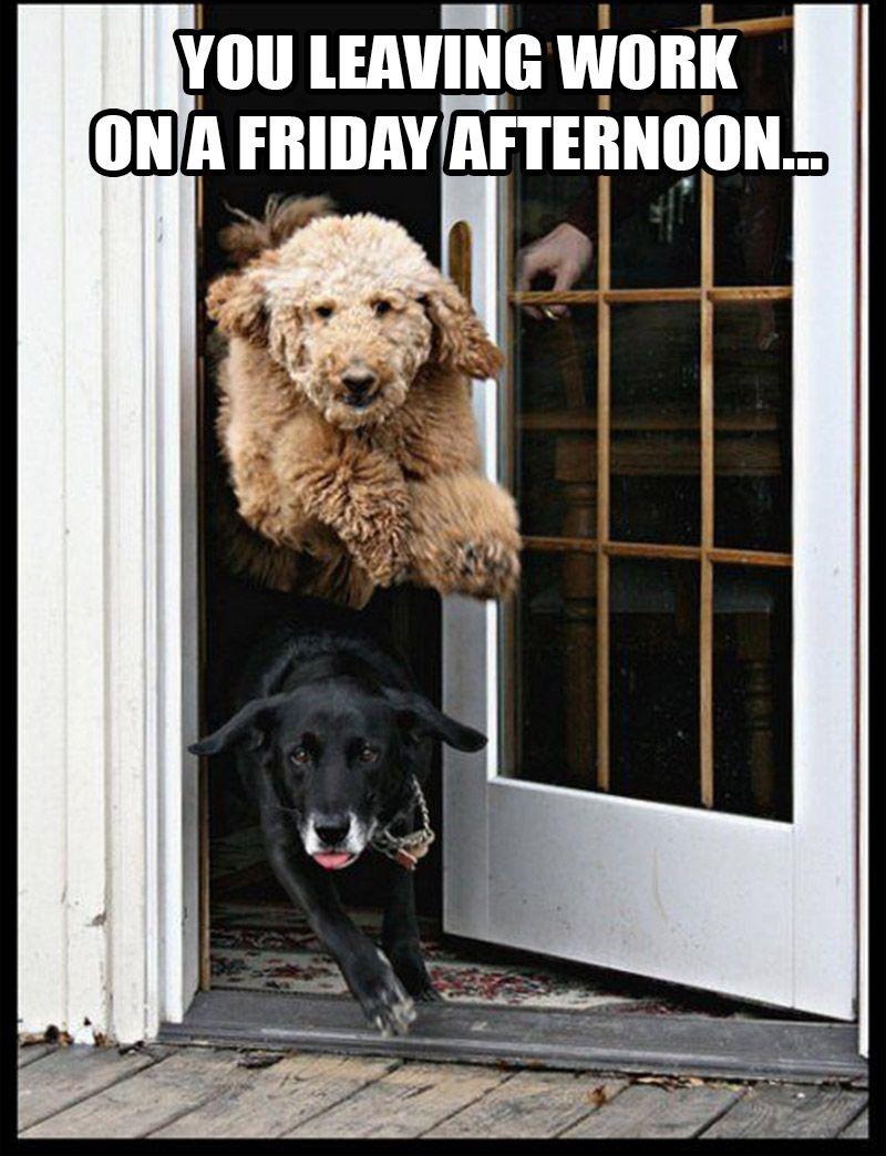 Top 20+ Funny Memes Friday Funny animals, Animal memes