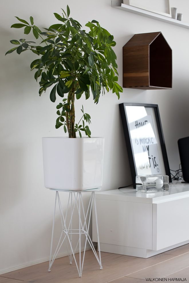 interior decor styling plant vase scandinavian