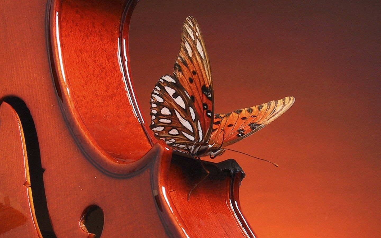 Red Butterfly Images Hd
