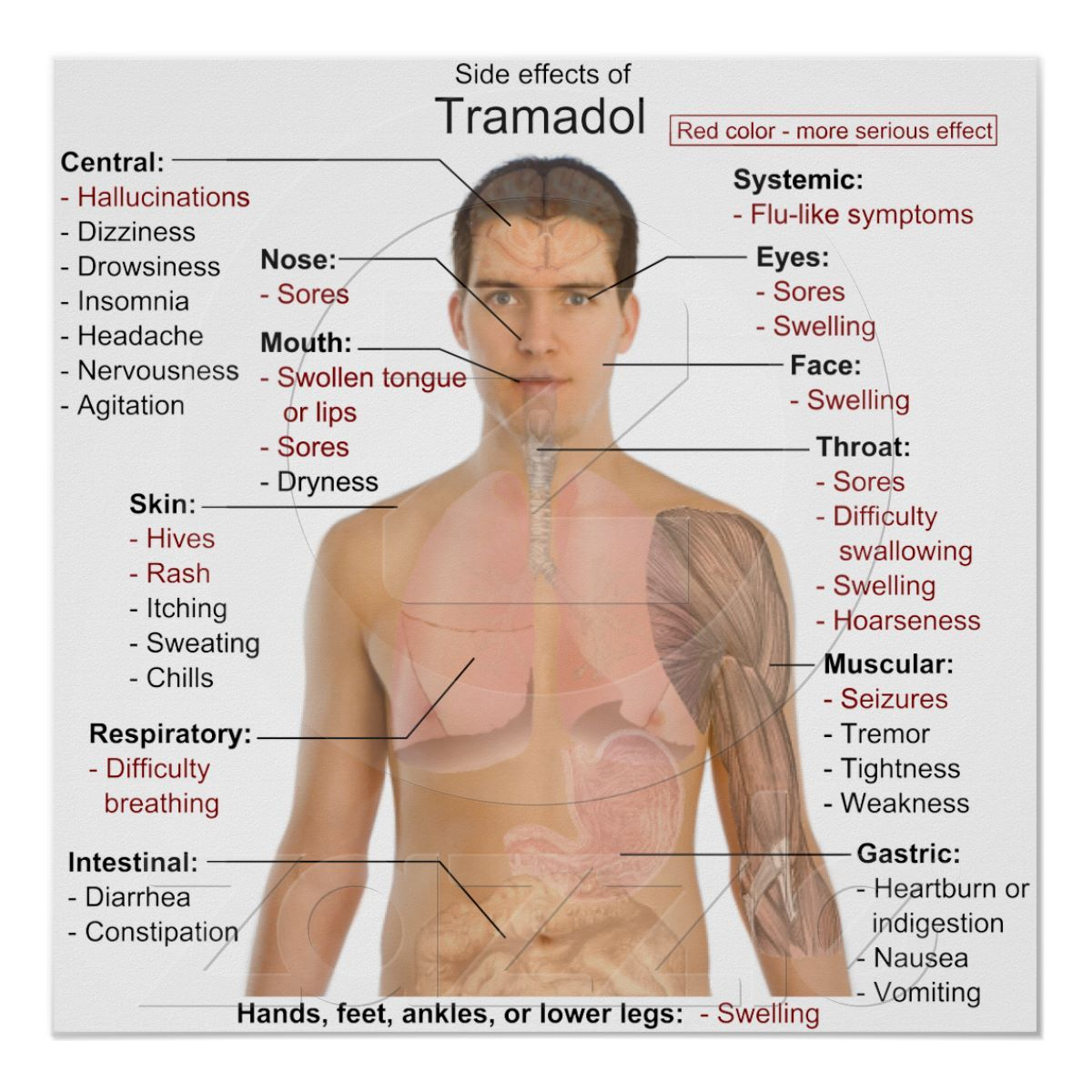 tramadol vs hydrocodone opioids drugs for pain