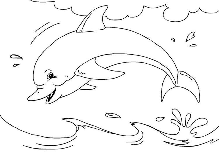 Раскраска дельфин | Kleurplaten, Gratis kleurplaten