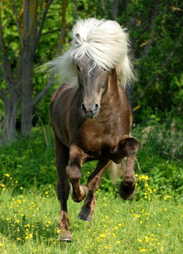 View All Images At أجمل خيول العالم صور Folder Beautiful Horses Beautiful Horses Photography Horses