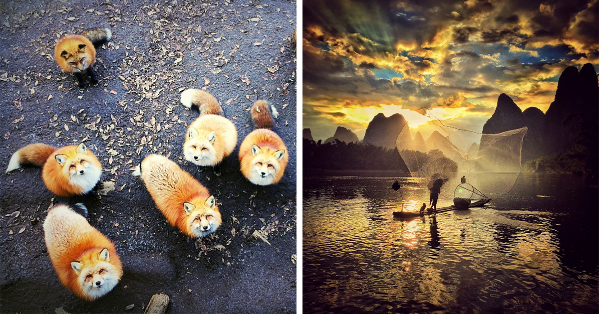 2016 iPhone Photography Award Winners Prove Again Amazing Photos Can Be Taken Without Expensive Camera | Bored Panda
