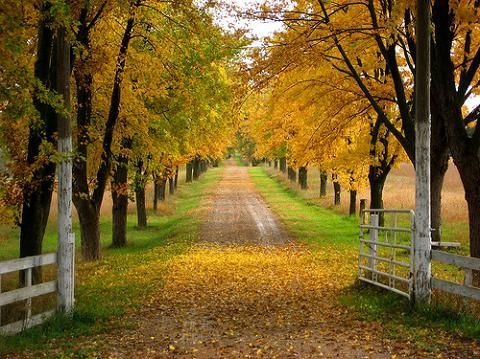 love the long driveway lined with trees dream home in 2018