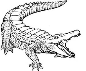 Crocodile Sketch Crocodile Illustration Coloring Pages For Kids Animal Coloring Pages